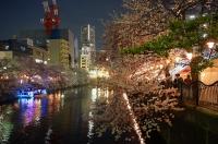 夜桜 満開 北欧の家 ジューテックホーム (1).JPG